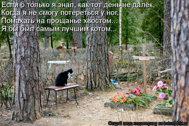 Котоматрица: Если б только я знал, как тот день не далёк, Когда я не смогу потереться у ног, Помахать на прощанье хвостом... Я бы был самым лучшим котом...