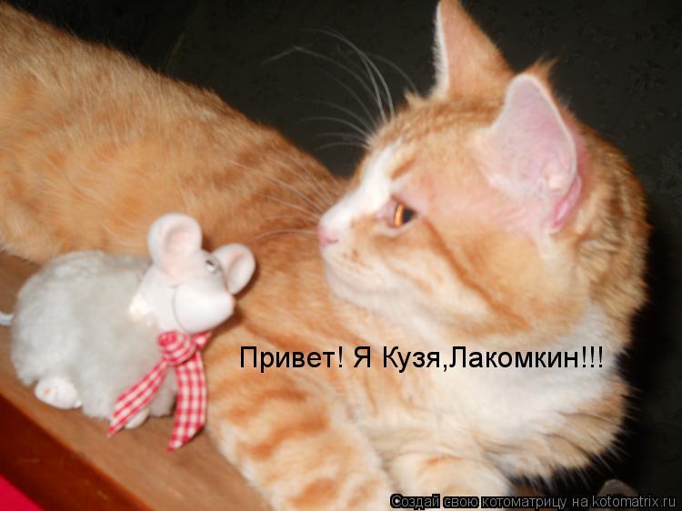 Котоматрица: Привет! Я Кузя,Лакомкин!!!
