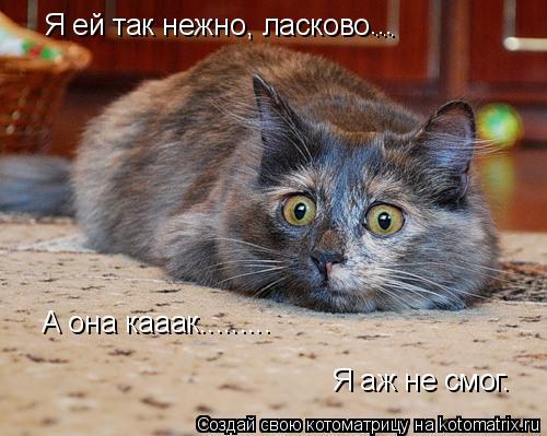 Котоматрица: Я ей так нежно, ласково ... ... А она кааак......... Я аж не смог.