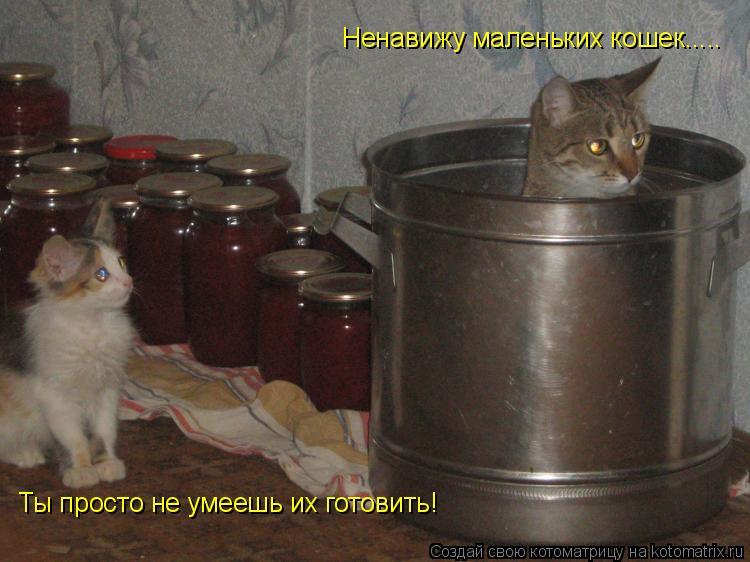 Котоматрица: Ненавижу маленьких кошек..... Ты просто не умеешь их готовить!