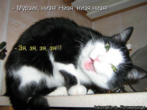 Котоматрица: - Мурзик, низя! Низя, низя,низя! - Зя, зя, зя, зя!!!