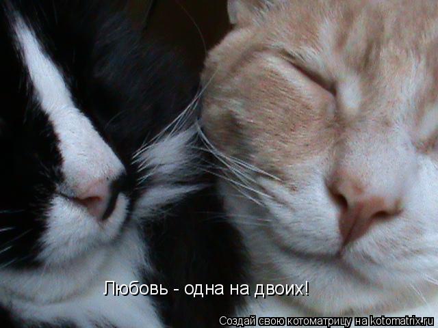 Котоматрица: Любовь - одна на двоих!
