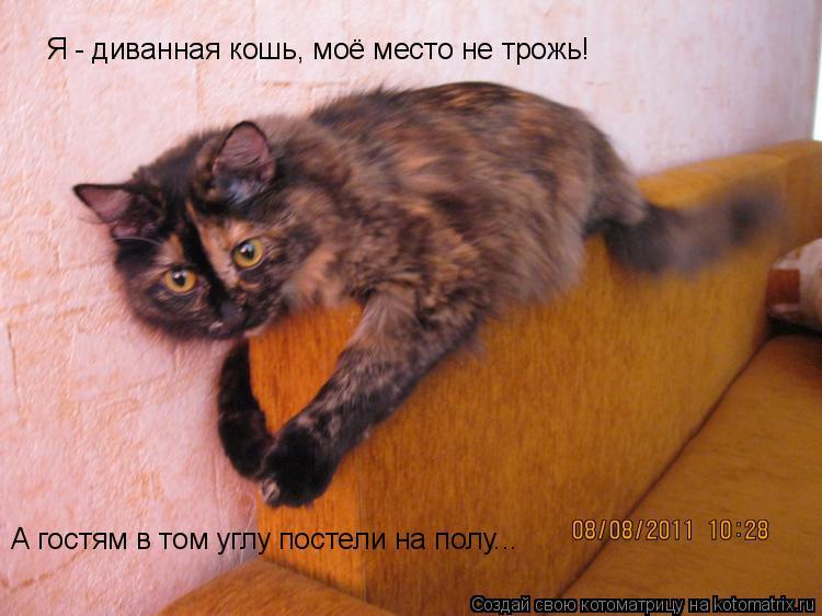 Котоматрица: Я - диванная кошь, моё место не трожь! А гостям в том углу постели на полу...