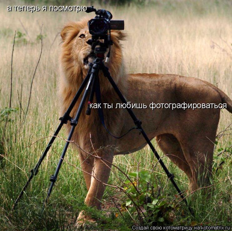 Котоматрица: а теперь я посмотрю как ты любишь фотографироваться
