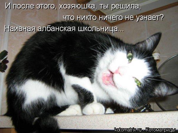 Котоматрица: И после этого, хозяюшка, ты решила, что никто ничего не узнает? Наивная албанская школьница...