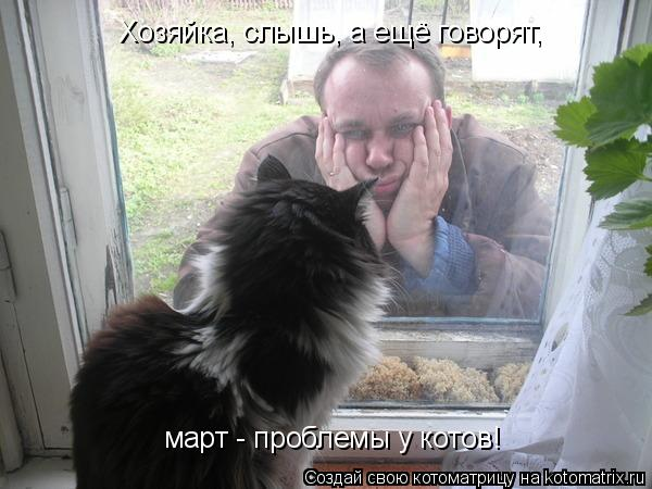 Котоматрица: Хозяйка, слышь, а ещё говорят,  март - проблемы у котов!