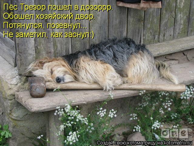 Котоматрица: Пёс Трезор пошел в дозоррр. Обошел хозяйский двор. Потянулся, позевнул... Не заметил, как заснул:)