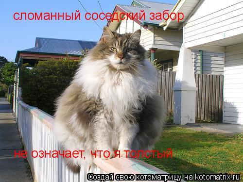 Котоматрица: сломанный соседский забор  не означает, что я толстый