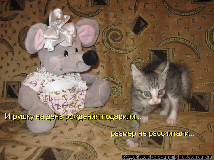 Котоматрица: Игрушку на день рождения подарили... размер не рассчитали...