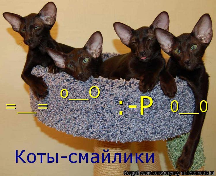 Котоматрица: Коты-смайлики =__= :-P o__O 0__0