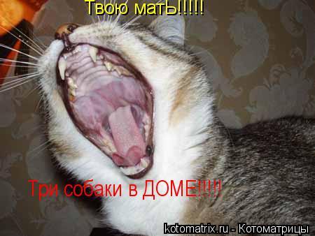 Котоматрица: Твою матЬ!!!!! Твою матЬ!!!!! Три собаки в ДОМЕ!!!!!