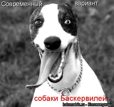 Котоматрица: Современный вариант собаки Баскервилей