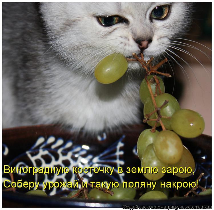 Котоматрица - Виноградную косточку в землю зарою, Соберу урожай и такую поляну накро