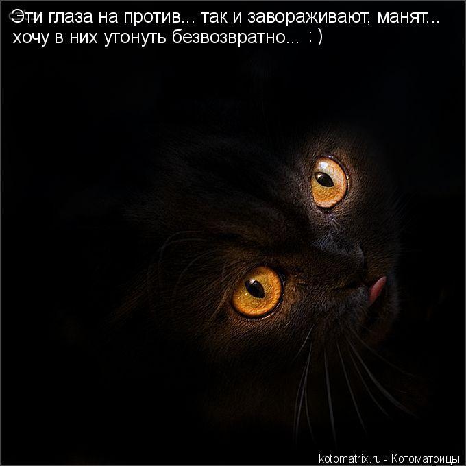 Котоматрица: Эти глаза на против... так и завораживают, манят... хочу в них утонуть безвозвратно... : )