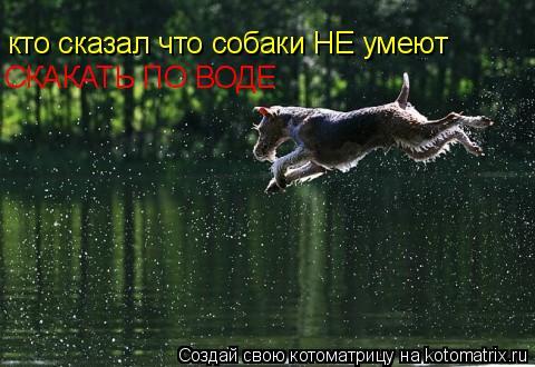 Котоматрица: кто сказал что собаки НЕ умеют СКАКАТЬ ПО ВОДЕ