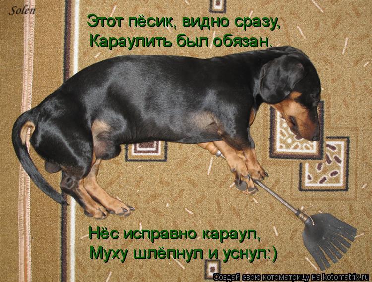 Котоматрица: Этот пёсик, видно сразу, Караулить был обязан. Нёс исправно караул, Муху шлёпнул и уснул:)