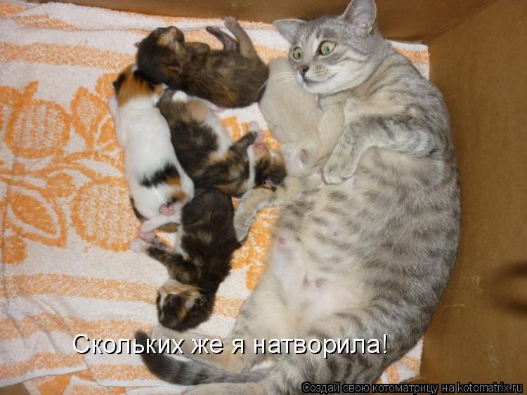 Котоматрица - Скольких же я натворила!