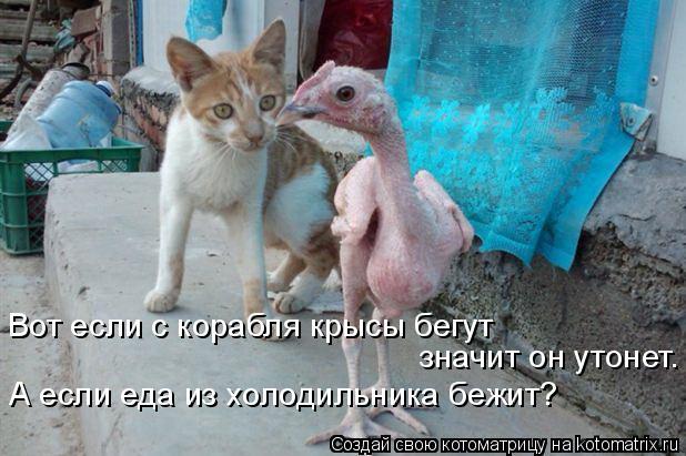 Котоматрица: Вот если с корабля крысы бегут значит он утонет. А если еда из холодильника бежит?