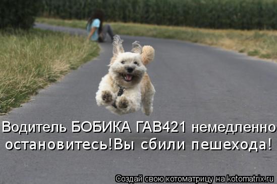 Котоматрица: остановитесь!Вы сбили пешехода! Водитель БОБИКА ГАВ421 немедленно
