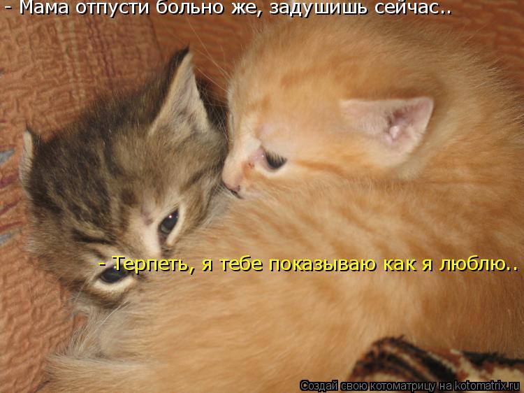 Котоматрица: - Мама отпусти больно же, задушишь сейчас.. - Терпеть, я тебе показываю как я люблю..