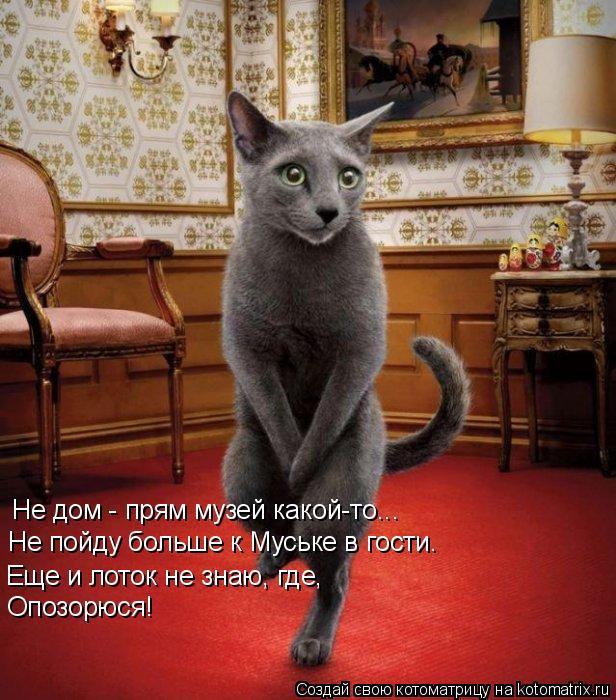 Котоматрица: Не дом - прям музей какой-то... Еще и лоток не знаю, где, Не пойду больше к Муське в гости. Опозорюся!