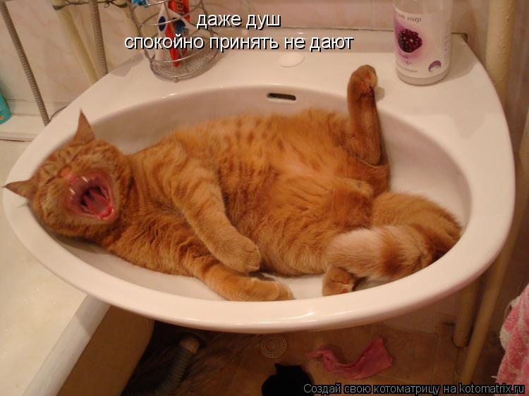 Котоматрица: даже душ спокойно принять не дают