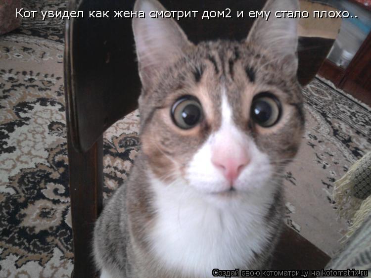 Котоматрица: Кот увидел как жена смотрит дом2 и ему стало плохо..