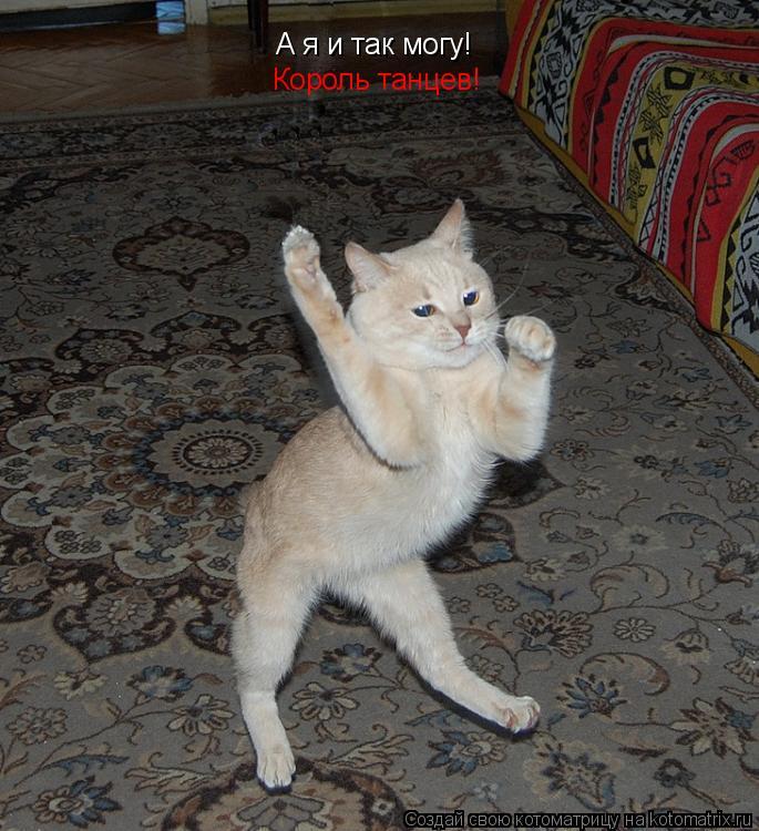 Котоматрица: А я и так могу! Король танцев!