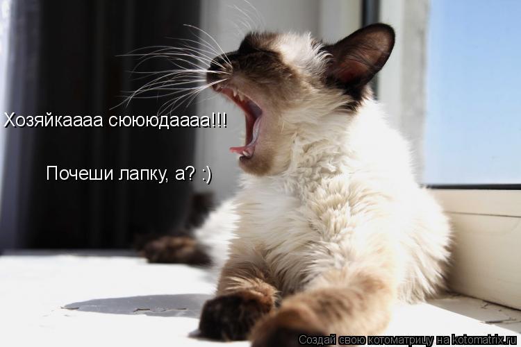 Котоматрица: Хозяйкаааа сюююдаааа!!!  Почеши лапку, а? :)