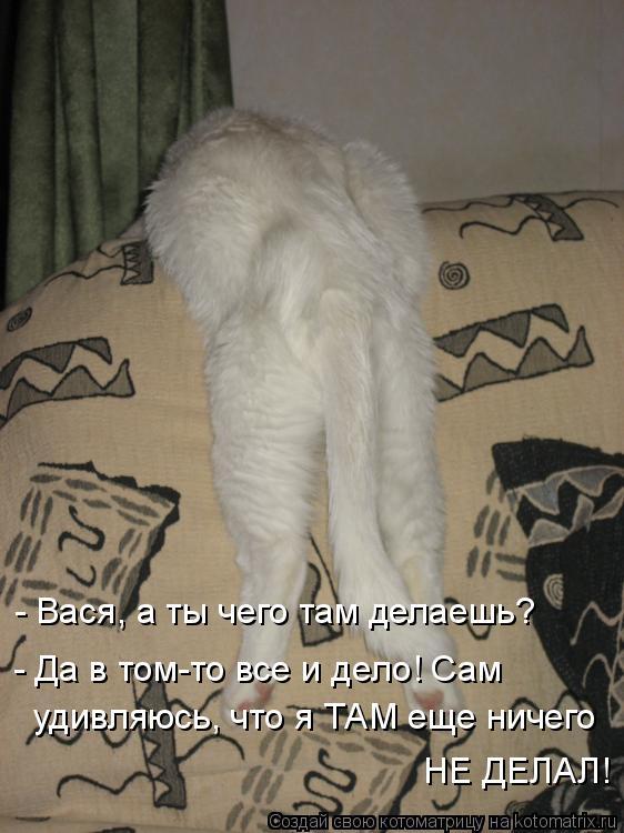 Котоматрица - - Вася, а ты чего там делаешь? - Да в том-то все и дело! Сам  удивляюс