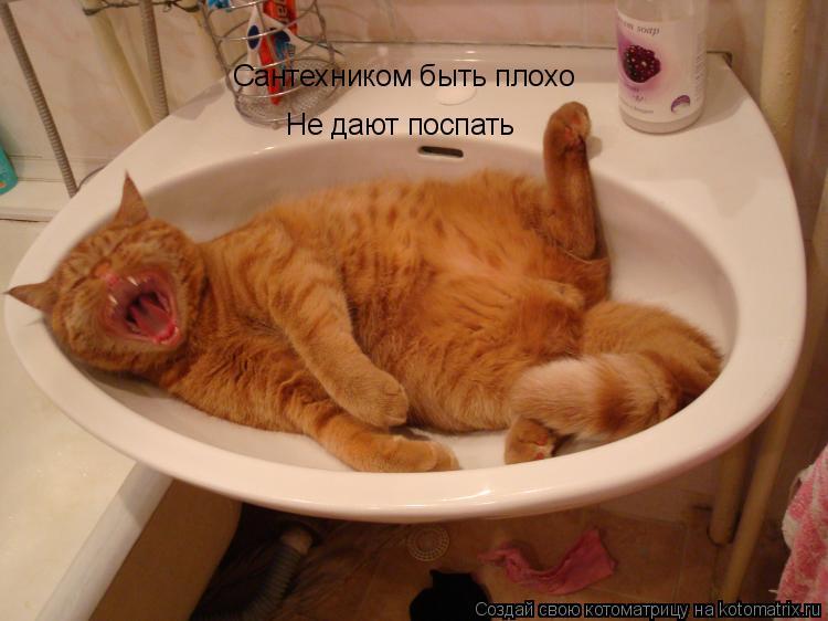 Котоматрица: Сантехником быть плохо Не дают поспать
