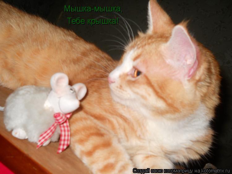 Котоматрица: Мышка-мышка, Тебе крышка!