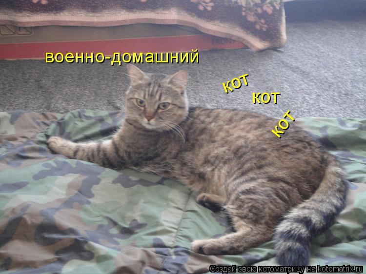 Котоматрица: военно-домашний  кот кот кот