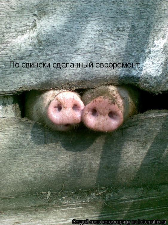 Котоматрица: По свински сделанный евроремонт...