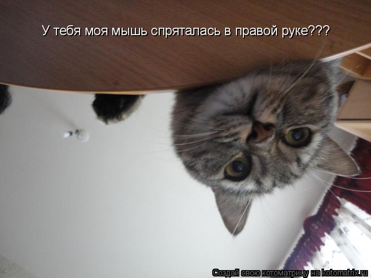 Котоматрица: У тебя моя мышь спряталась в правой руке???