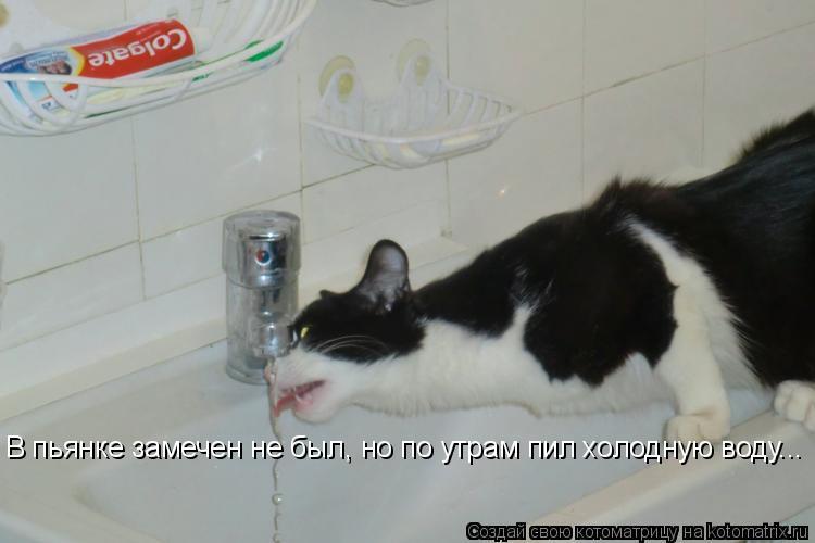 Котоматрица: В пьянке замечен не был, но по утрам пил холодную воду...
