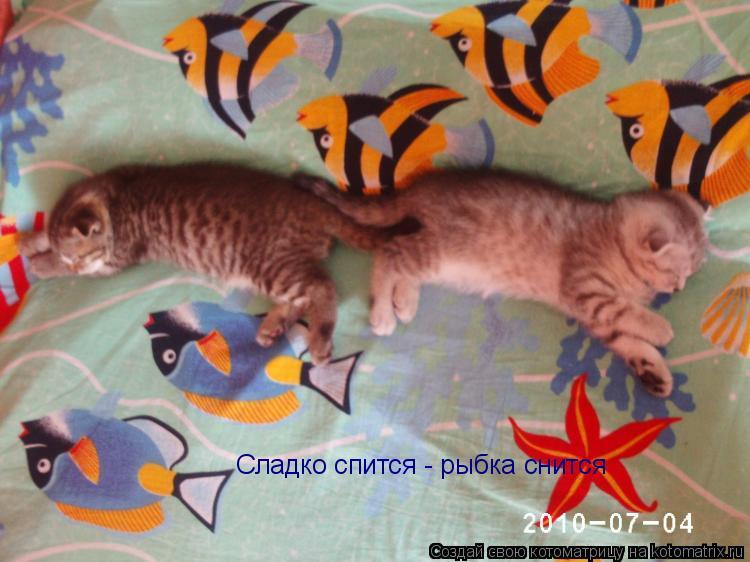 Котоматрица: Сладко спится - рыбка снится
