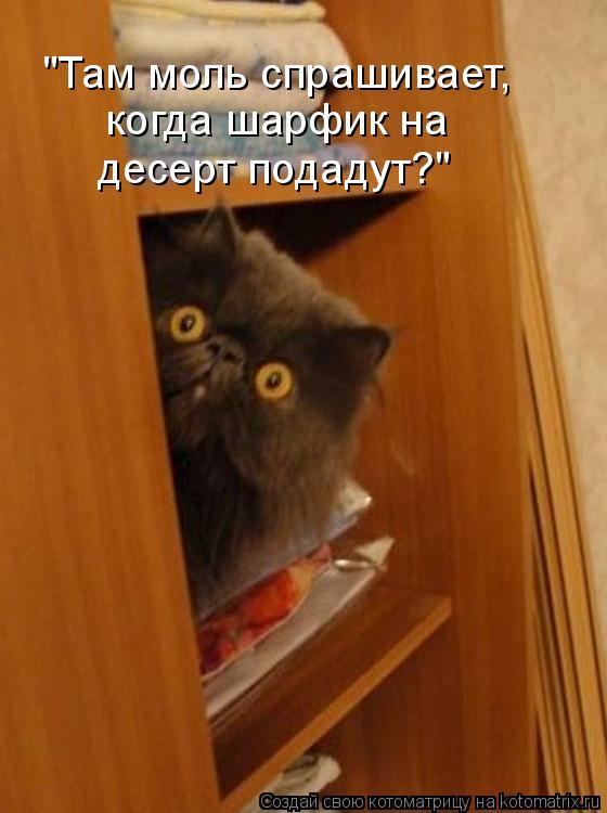"""Котоматрица - """"Там моль спрашивает, когда шарфик на  десерт подадут?"""""""