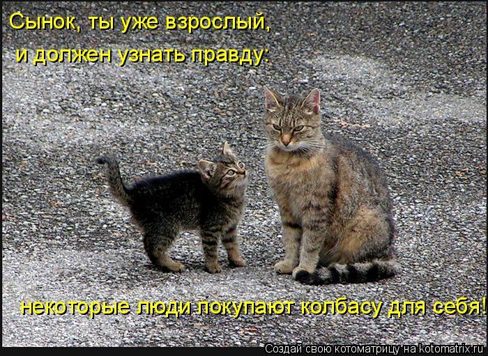 Котоматрица: Сынок, ты уже взрослый, и должен узнать правду: некоторые люди покупают колбасу для себя!