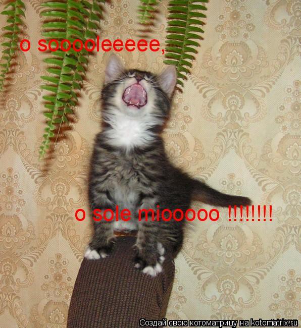 Котоматрица: о sooooleeeee,  o sole miooooo !!!!!!!!