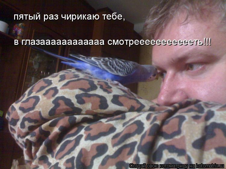 Котоматрица: пятый раз чирикаю тебе,  в глазаааааааааааа смотреееееееееееть!!!