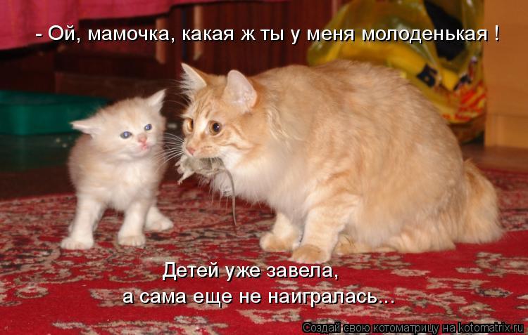 Котоматрица - - Ой, мамочка, какая ж ты у меня молоденькая ! Детей уже завела, а сам