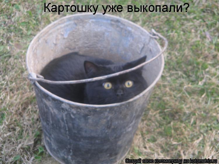 Котоматрица: Картошку уже выкопали?