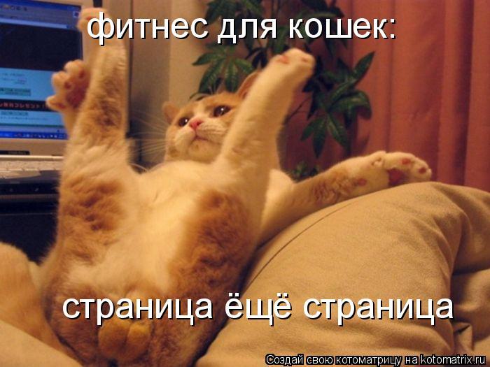 Котоматрица: страница ёщё страница фитнес для кошек: