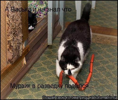 Котоматрица: А Васька и не знал что Мурзик в разведку подался...