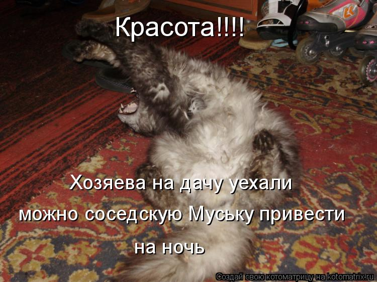 Котоматрица: Красота!!!! Хозяева на дачу уехали   можно соседскую Муську привести  на ночь