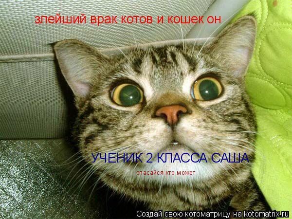 Котоматрица: злейший врак котов и кошек он                УЧЕНИК 2 КЛАССА САША       спасайся кто может