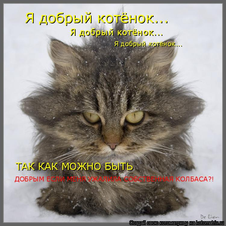 Котоматрица: Я добрый котёнок... Я добрый котёнок... Я добрый котёнок... ТАК КАК МОЖНО БЫТЬ  ДОБРЫМ ЕСЛИ МЕНЯ УЖАЛИЛА СОБСТВЕННАЯ КОЛБАСА?!