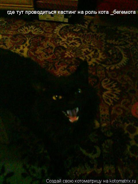 Котоматрица: где тут проводиться кастинг на роль кота _бегемота