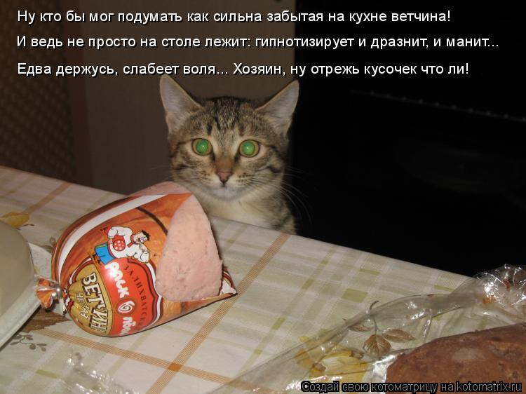 Котоматрица: Ну кто бы мог подумать как сильна забытая на кухне ветчина! И ведь не просто на столе лежит: гипнотизирует и дразнит, и манит... Едва держусь,